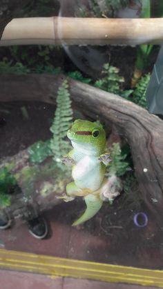 Friendly little gecko