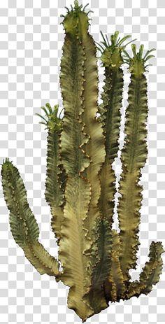 Cactus Painting, Plant Painting, Cactus Art, Cliparts Free, Tree Photoshop, Paper Succulents, Cactus Plant Pots, Paving Design, Cactus Illustration