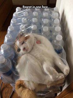 If I fits, I... Nope...