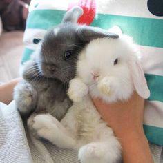 2 baby bunnies.