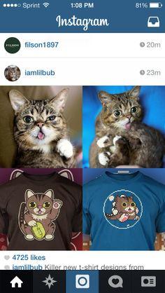 1d82254826e Internet cat sensation Lil Bub gets her own T shirt from TheYeTee.com.