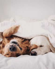 Baby animals, animals and pets, funny animals, cute animals, cute pup Cute Baby Animals, Animals And Pets, Funny Animals, Cute Dogs And Puppies, I Love Dogs, Doggies, Adorable Puppies, Sleeping Dogs, Dog Life
