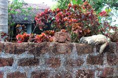 Sacred is in ordinary. #Goa, #India #MotherIndia. February, 2014 #photography #detail #cat #life #earth #love #live #wall #sleep #peace