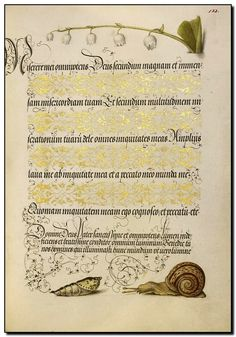 Lily-of-the-Valley, Pupa, and Land Snail  Maker Name:   Joris Hoefnagel (illuminator) [Flemish / Hungarian, 1542 - 1600] and Georg Bocskay (scribe) [Hungarian, died 1575]  Type:   Manuscripts  Medium:   Watercolors, gold and silver paint, and ink on parchment  Place:   Place Created: Vienna, Austria, Europe  Date:   1561 - 1562; illumination added 1591 - 1596
