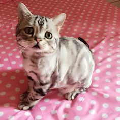 Luhu the Sad Cat