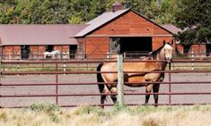 Recent research has given us more insight into how to manage horses affected by or vulnerable to laminitis. If your horse falls into the at-risk category, consider these diet changes. Fat Horse, Horse Magazine, Exercise Physiology, Animal Nutrition, Veterinary Medicine, Large Animals, Horse Care, Types Of Houses, Pet Care