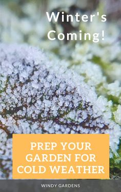 Winter's coming. Fall is the time to prep your garden for cold weather. Better get to work! Read on to learn what all needs to get done for fall garden prep Lawn Edging, Garden Edging, Fall Is Here, Winter Is Coming, Winter Garden, Container Plants, Garden Planning, Cold Weather, Gardening Tips