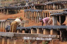 Coffee drying tables in Tanzania