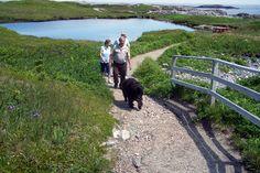 The Harvey Trail on Isle aux Morts, Newfoundland Canada Newfoundland Canada, Newfoundland And Labrador, Londonderry, Nova Scotia, Family History, Trail, Scenery, Coast, Around The Worlds