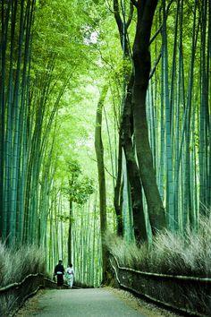 Bamboo path, Arashiyama, Kyoto, Japan