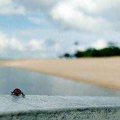 Adeus 2016.  Vida e Morte Joaninha.  #joaninha #ladybug #joana #insect #bug #bugslife #vidadeinseto #inseto #praia #beach #rio #praiaderio #areia #sand #barco #boat #viagem #ferias #alterdochao #alter #pontadomureta #santarem #pará #brasil #macro #motog3