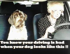 jpg - One of 25641 files in the category & # - Sprüche und co - Humor Funny Quotes, Funny Memes, Hilarious, Car Memes, Funny Animal Pictures, Funny Animals, Animal Pics, Tierischer Humor, Bad Drivers