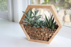 Needles + Leaves exclusive DIY Hexagon Succulent Planter Kit is the perfect craft for a modern plant lady (or plant guy) with its handcrafted geometric design. Plant one for yourself or give it as a memorable gift! Multiple pieces can be stacked to create an eye catching honeycomb effect.