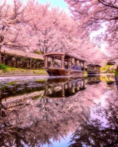 Gallery with top Japan places, 20 pics * Travel Forever Places Around The World, Around The Worlds, Cherry Blossom Japan, Aesthetic Japan, Blossom Trees, Japan Travel, Amazing Nature, Beautiful Landscapes, Nature Photography