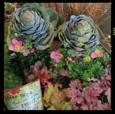 Color mix of fall plant arrivals for window shopping at Urban Garden Company  Ornamental cabbage, Japanese anemone, coral bells (Heuchera)