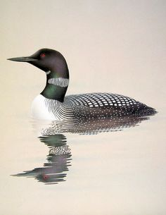 1989 Vintage Bird Illustration Common Loon by mysunshinevintage, $10.00