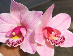 Cold porcelain Cymbidium Orchid Tutorial