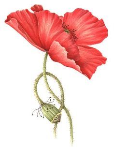 poppy watercolor | Last Updated Jun 21, 2012