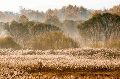 Утро туманное в первой декаде октября, дальневосточная природа, свежесть и спокойствие, осень