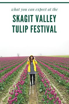 Here is everything you need to know about visiting the Skagit Vallley Tulip Festival, a great day trip from Seattle in the spring .You willl see rows upon rows of Washington state tulip fields in bloom, signaling it's spring in Washington state. #thingstodoinwashingtonstatespring #washingtontulipfestival #washingtonstatetulipfields #skagitvalleytulipfields #washingtontulipfields #tuliptownwashington #tulipswashingtonstate #skagitvalleytulipfestival #washingtonflowerfields Day Trips From Seattle, Tulip Festival, Tulip Fields, Washington State, Pacific Northwest, North West, Tulips, The Row, Bloom
