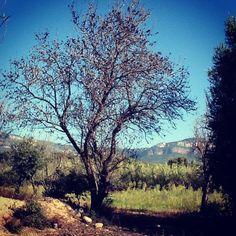 Instagram photo by @jordicure (Jordi Vallverdu)   Iconosquare