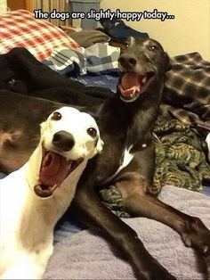 Funny Slightly Happy Dogs