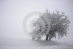Photo about Very close tree trunks with foliage united covered in a thick layer of frosty snow. Image of gray, resistance, thick - 48859657 Two Trees, Tree Trunks, The Unit, Snow, Stock Photos, Flowers, Plants, Photography, Outdoor