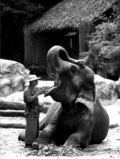 The elephant dentist...
