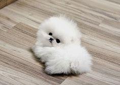 Cute miniature dog