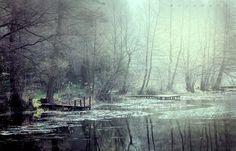 Bory Tucholskie by +moje bory Płęsno  http://mojebory.blogspot.com/   #Polska #Poland#zdjęcia #krajobrazy #Bory_tucholskie #warsinski #zdjęciaborówtucholskich #las #płęsno #landscape #natureinpoland #nature #lake #charzykowskie