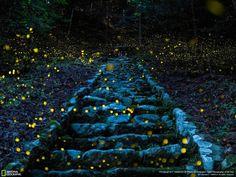 National Geographic: Δείτε τις φωτογραφίες που κέρδισαν στο διαγωνισμό | Pronews