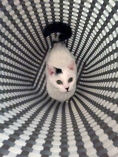 Is This Cat in a Hamper or a Wormhole Traveling Through Time?