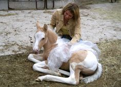 Imprint Training of the Newborn Foal | Expert advice on horse care and horse riding