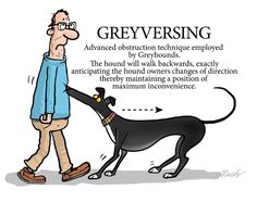 Another greyhound trick.