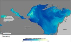 Sea ice is not a sterile environment