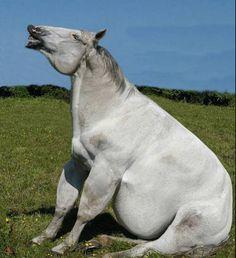 El gordo Aquiles  Aquiles es un caballo de 12 años castrado, y su dueño lo trata como si fuera su mascota. Es un caballo que pasta libremente todo el día y ademas su queridísimo dueño le da heno de hierba dos veces al día, pienso por la noche y un fathorsesuplemento vitamínico.