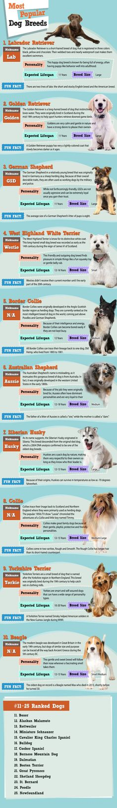The Most Popular #Dog Breeds of 2015 - In January and February we polled people from around the world, asking them to vote for their favorite dog breed. After collecting more than 17,500 votes, the top dog breeds of 2015 have been revealed!  Did your favorite breeds make it into the top? Are you surprised by a certain breed that made the cut? Tell us in the comments! #infographic