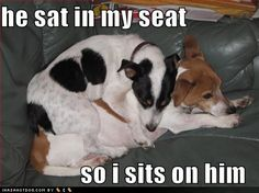 hahaha this is perfect, my ratties best friend is a beagle too