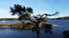 Fra kalvøya. j_w® original pic.