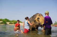 Volunteer Vacations in Thailand - elephant sanctuary Elephant Sanctuary Thailand, Thailand Elephants, Vacation Trips, Vacations, Vacation Ideas, Elephant Bath, Volunteer Services, The Good Place, Beautiful Places