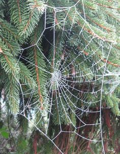 Check out these images of beautiful frozen spider webs in the winter garden.