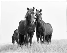 The Wild Horses of Sable Island | The collection