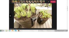 Passo a passo: aprenda a fazer uma horta orgânica em vaso http://mulher.uol.com.br/casa-e-decoracao/album/horta_organica_album.htm#fotoNav=23