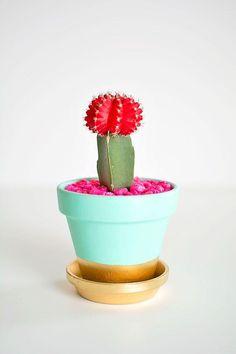 Decoración con cactus | Decorar tu casa es facilisimo.com