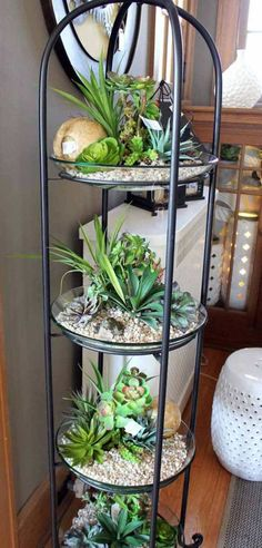 indoor garden projects 7 Top 24 Awesome Ideas to Display Your Indoor Mini Garden Cacti And Succulents, Planting Succulents, Planting Flowers, Cactus Plants, Small Cactus, Small Plants, Potted Plants, Inside Plants, Air Plants