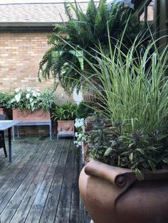 observations of a landscape designer Landscape Elements, Landscape Design, Container Plants, Container Gardening, Garden Windmill, Faux Grass, Outside Plants, New Roots, Xmas