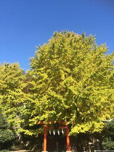 雷神社の御神木   死ぬまでに行きたい!世界の絶景