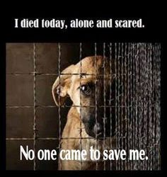 :'( (via All about Dogs on Facebook) Heartbreaking ... happens to too many animals!!!