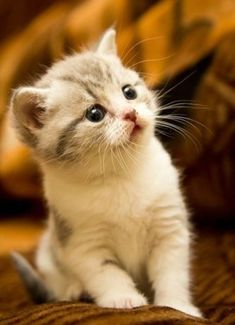 """""""No, I think you've got the wrong person... I did NOT steal the kitty"""" *secretly grins*"""