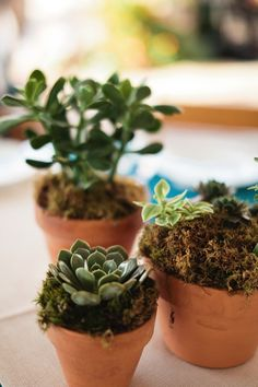 succulent centerpieces--This would be fairly simple, and could be done way ahead of time. Then cover the terra cotta with burlap and/or lace.